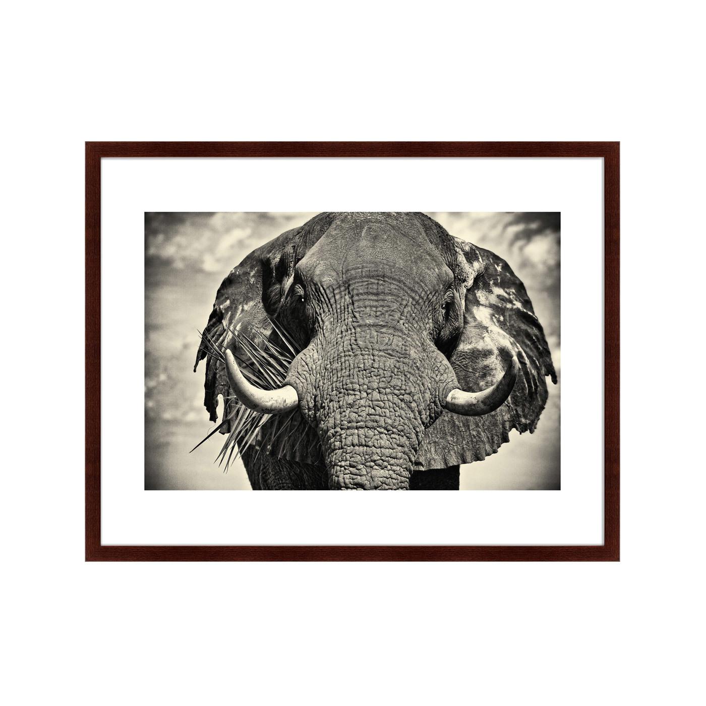 {} Картины в Квартиру Картина Слон (79х100 см) картины в квартиру картина бульдоги в шотландской клетке 35х35 см