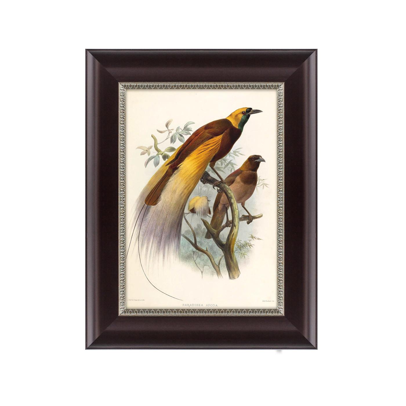 {} Картины в Квартиру Картина Большая Райская Птица (25х33 см) картины в квартиру картина красная райская птица 25х33 см