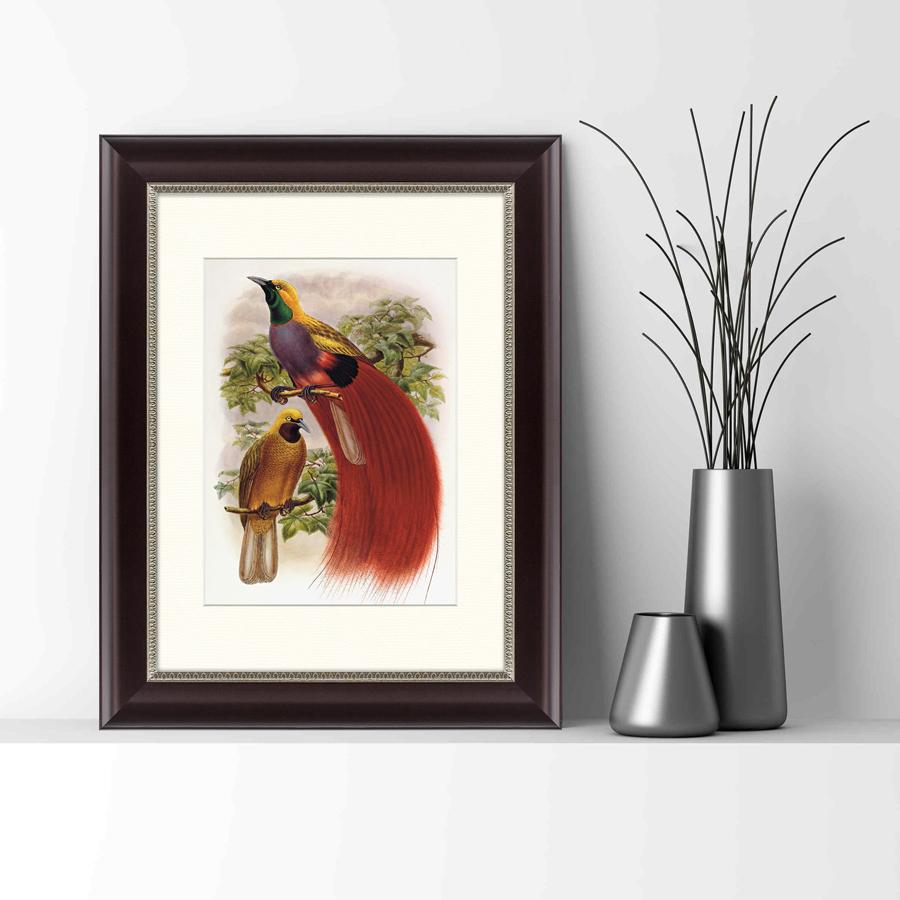{} Картины в Квартиру Картина Гольдиева Райская Птица (35х45 см) картины в квартиру картина убранное поле 35х45 см