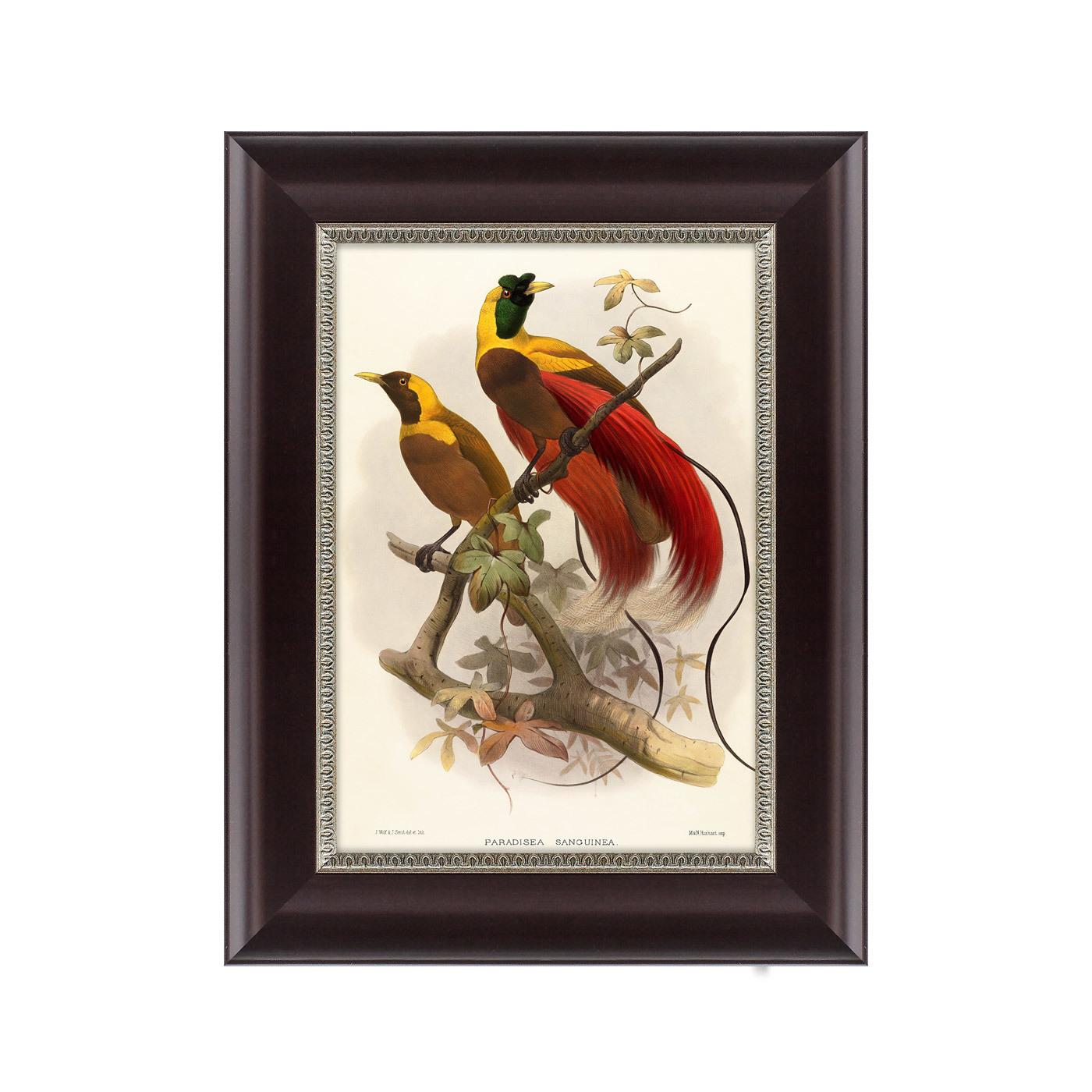 {} Картины в Квартиру Картина Красная Райская Птица (25х33 см) картины в квартиру картина красная райская птица 25х33 см