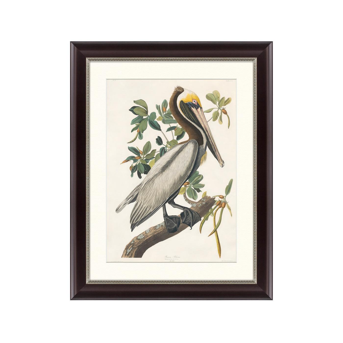 {} Картины в Квартиру Картина Американский Бурый Пеликан (47х60 см) картины в квартиру картина пилигрим из мешхеда 47х60 см