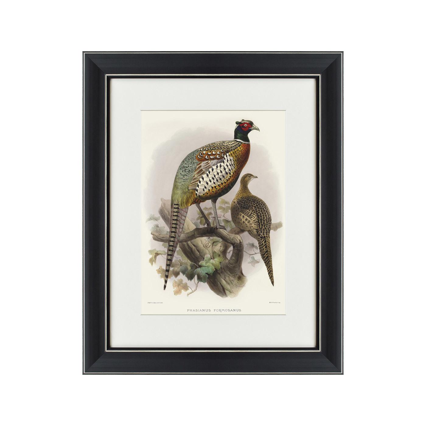 {} Картины в Квартиру Картина Китайский Кольчатый Фазан (42х52 см) картины в квартиру картина попугай 42х52 см