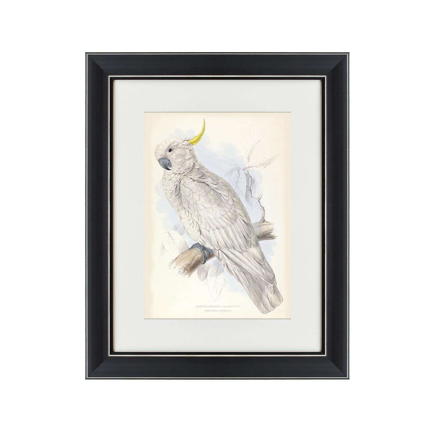 {} Картины в Квартиру Картина Белый Какаду (42х52 см) картины в квартиру картина попугай 42х52 см