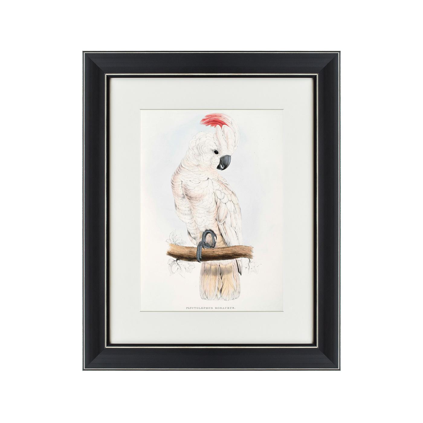 {} Картины в Квартиру Картина Молуккский Какаду (42х52 см) картины в квартиру картина серобрюхий трагопан 42х52 см