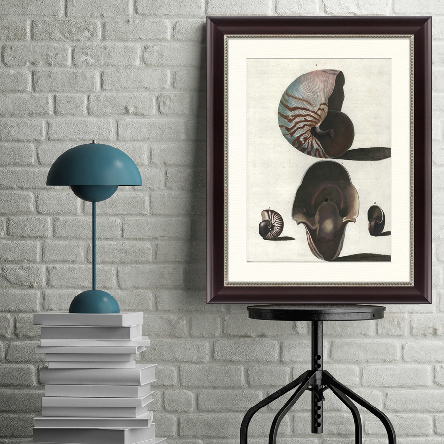 {} Картины в Квартиру Картина Наутилус (47х60 см) картины в квартиру картина морские мидии 2 35х45 см