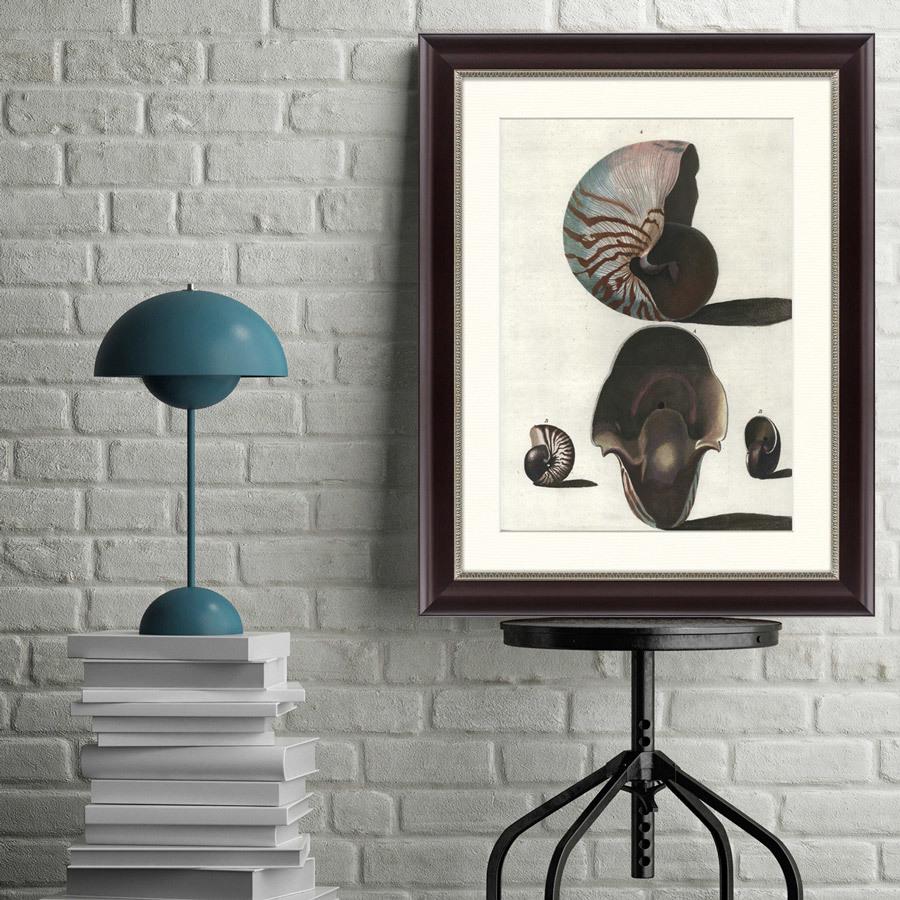 {} Картины в Квартиру Картина Наутилус (47х60 см) картины в квартиру картина серобрюхий трагопан 42х52 см