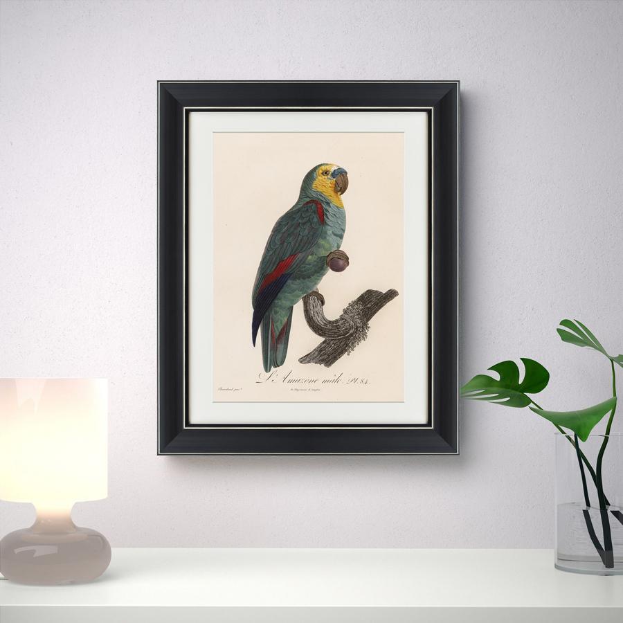 {} Картины в Квартиру Картина Попугай (42х52 см) картины в квартиру картина серобрюхий трагопан 42х52 см