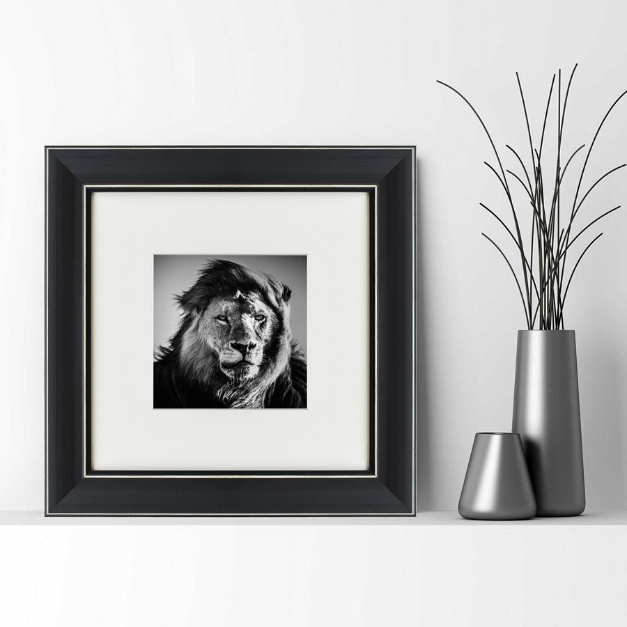 {} Картины в Квартиру Картина Портрет Льва (35х35 см) картины в квартиру картина бульдоги в шотландской клетке 35х35 см