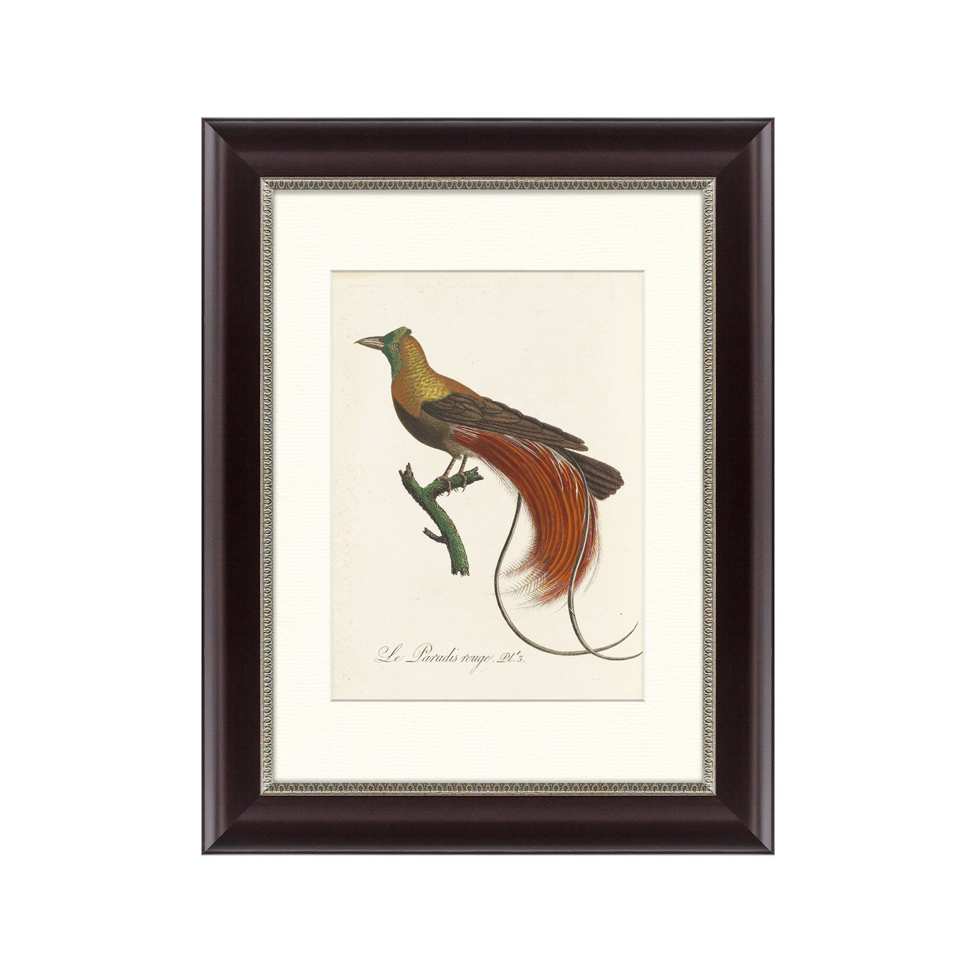 {} Картины в Квартиру Картина Райские Птицы Новой Гвинеи №2 (35х45 см) картины в квартиру картина каллы 2 35х35 см