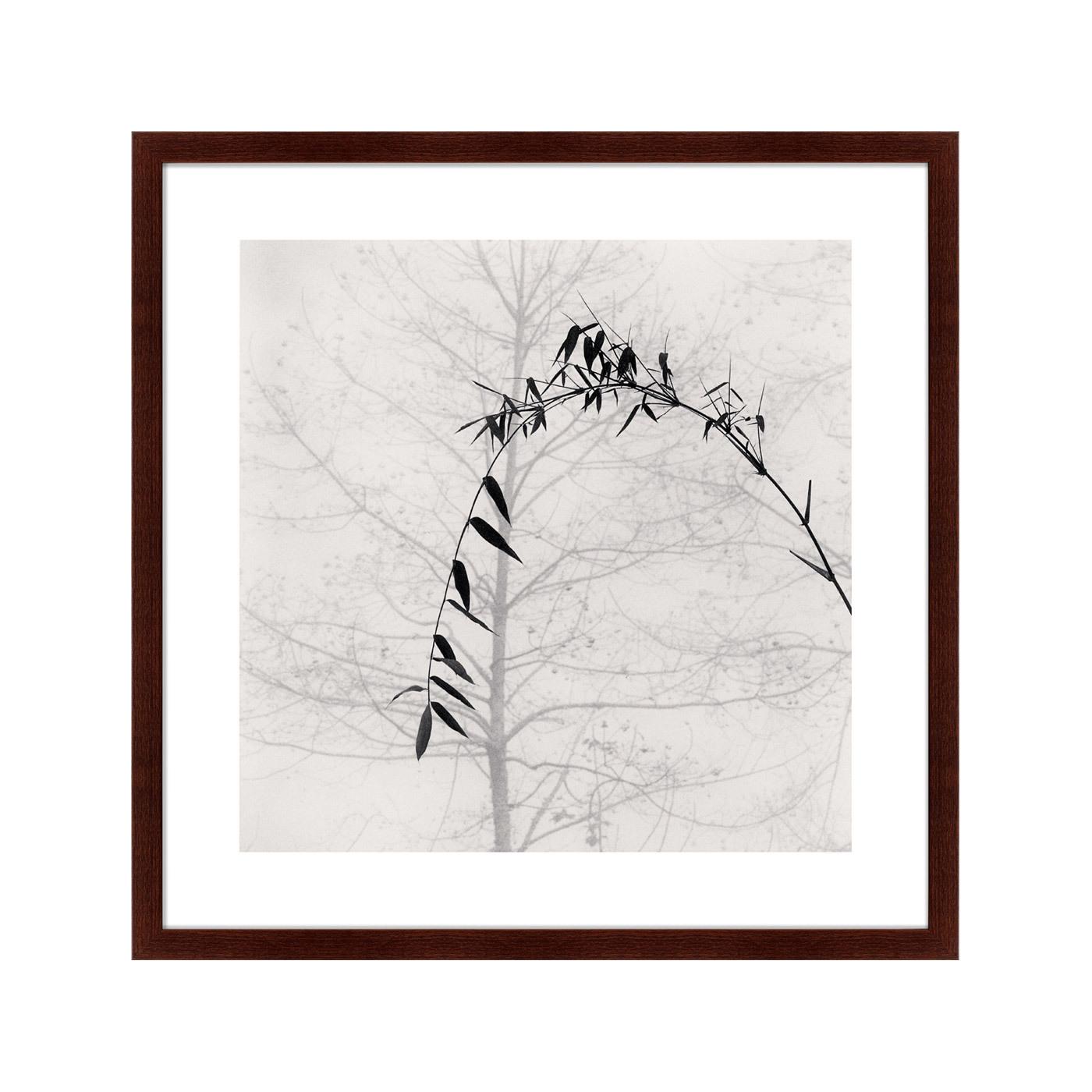{} Картины в Квартиру Картина Bamboo And Tree (79х79 см) картины в квартиру картина sun beams 79х79 см