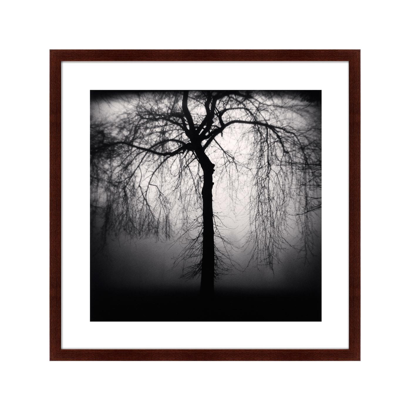 {} Картины в Квартиру Картина Sleeping Forest (79х79 см) картины в квартиру картина дерево на воде 102х130 см
