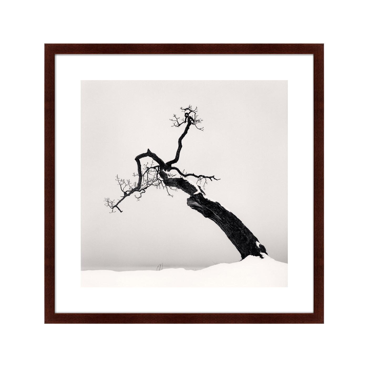 {} Картины в Квартиру Картина Snow No.1 (79х79 см) картины в квартиру картина серобрюхий трагопан 42х52 см