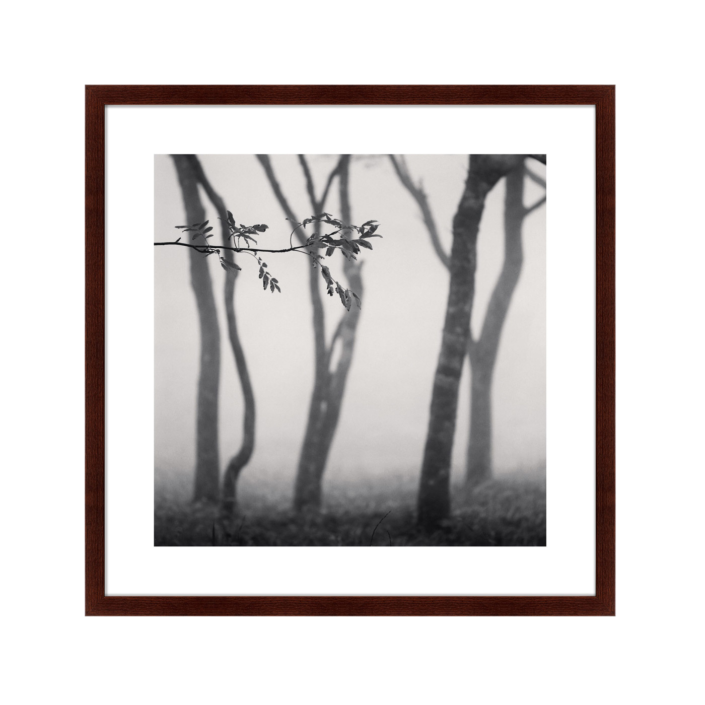 {} Картины в Квартиру Картина Tree (79х79 см) картины в квартиру картина серобрюхий трагопан 42х52 см