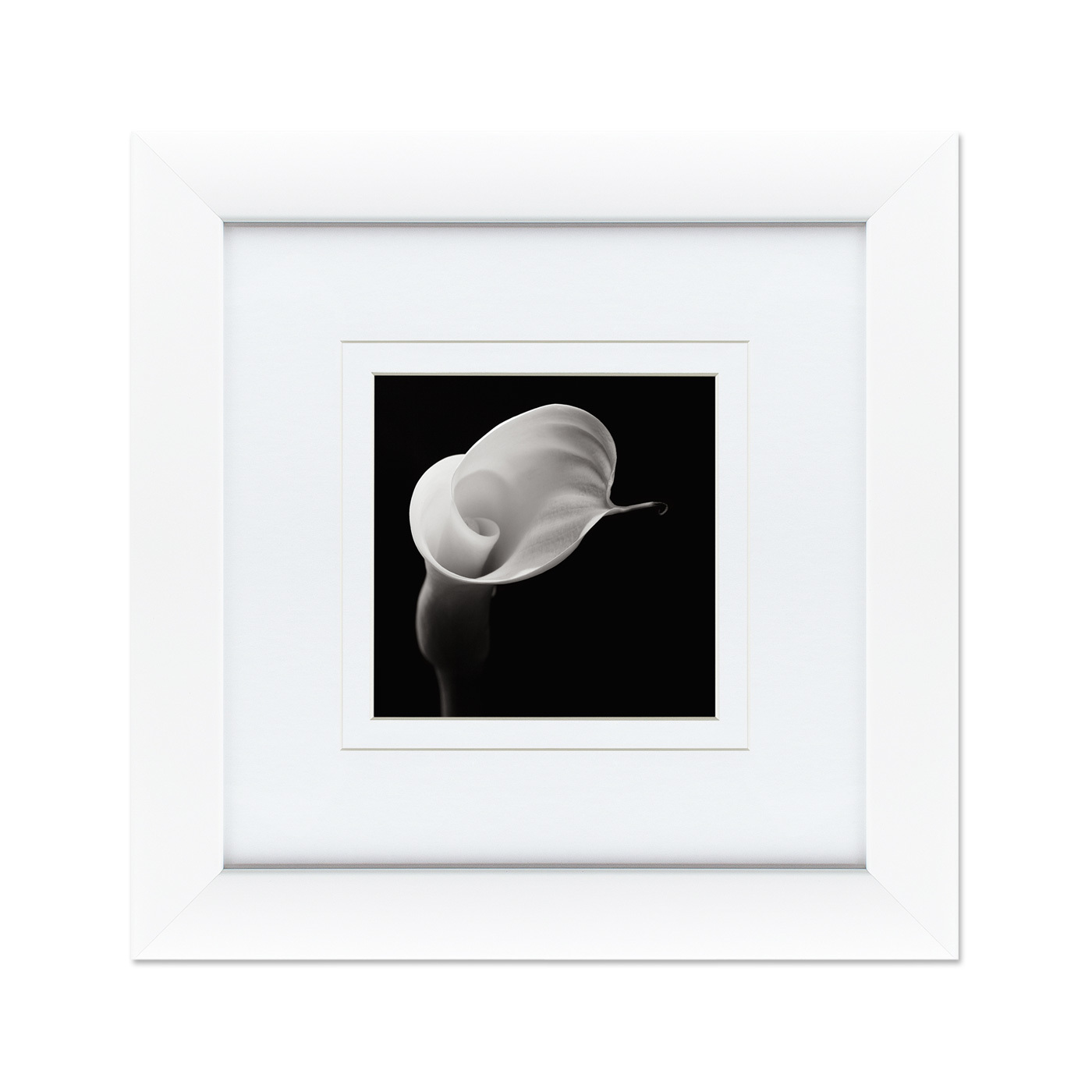 {} Картины в Квартиру Картина Каллы №3 (35х35 см) картины в квартиру картина бульдоги в шотландской клетке 35х35 см