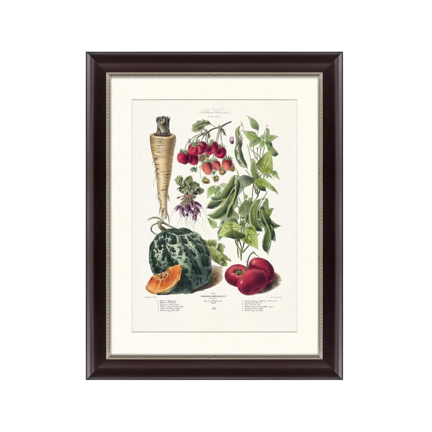 {} Картины в Квартиру Картина Vilmorin Andrieux & Cie, Альбом №30 (47х60 см) картины в квартиру картина пилигрим из мешхеда 47х60 см