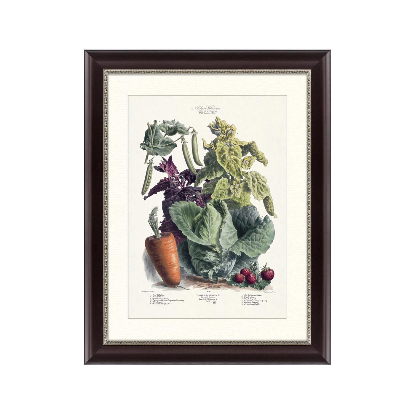 {} Картины в Квартиру Картина Vilmorin Andrieux & Cie, Альбом №42 (47х60 см) картины в квартиру картина пилигрим из мешхеда 47х60 см