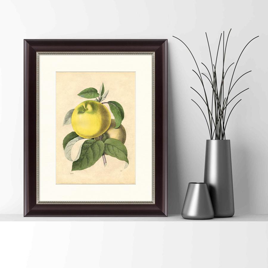 {} Картины в Квартиру Картина Яблоко Белый Налив (42х52 см) картины в квартиру картина попугай 42х52 см