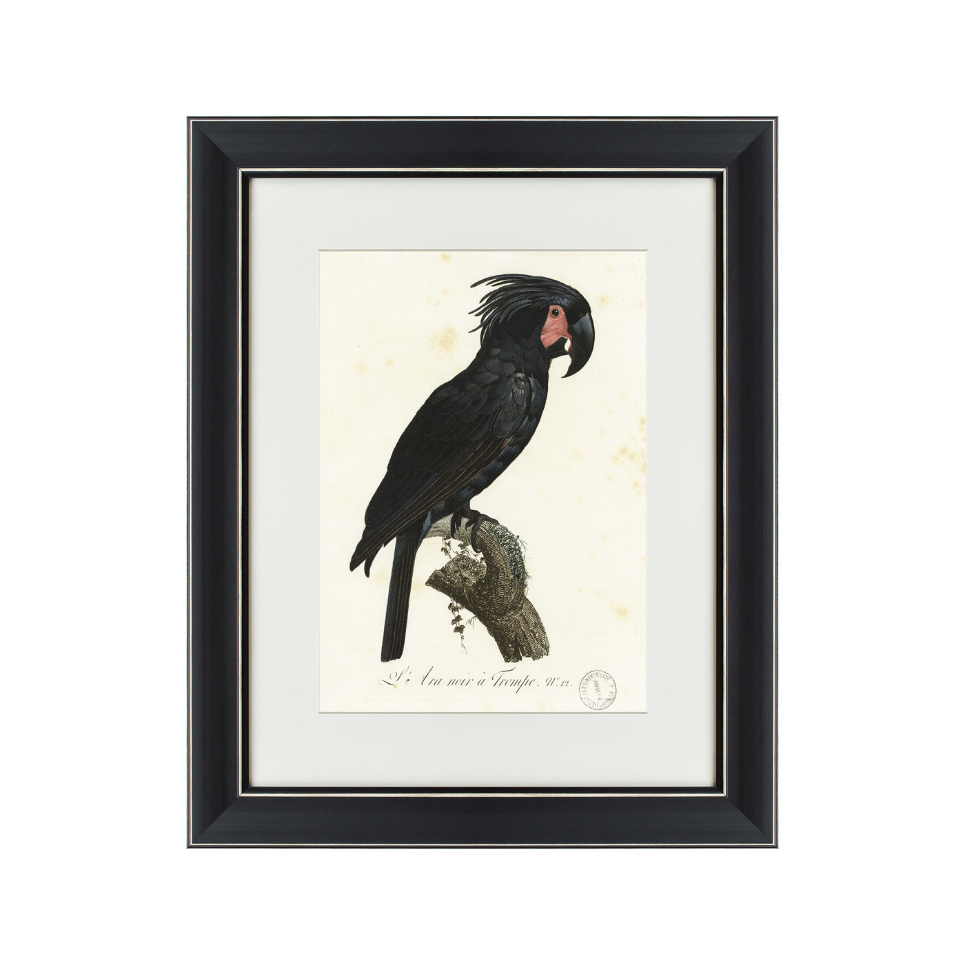 {} Картины в Квартиру Картина Чёрный Какаду (42х52 см) картины в квартиру картина серобрюхий трагопан 42х52 см