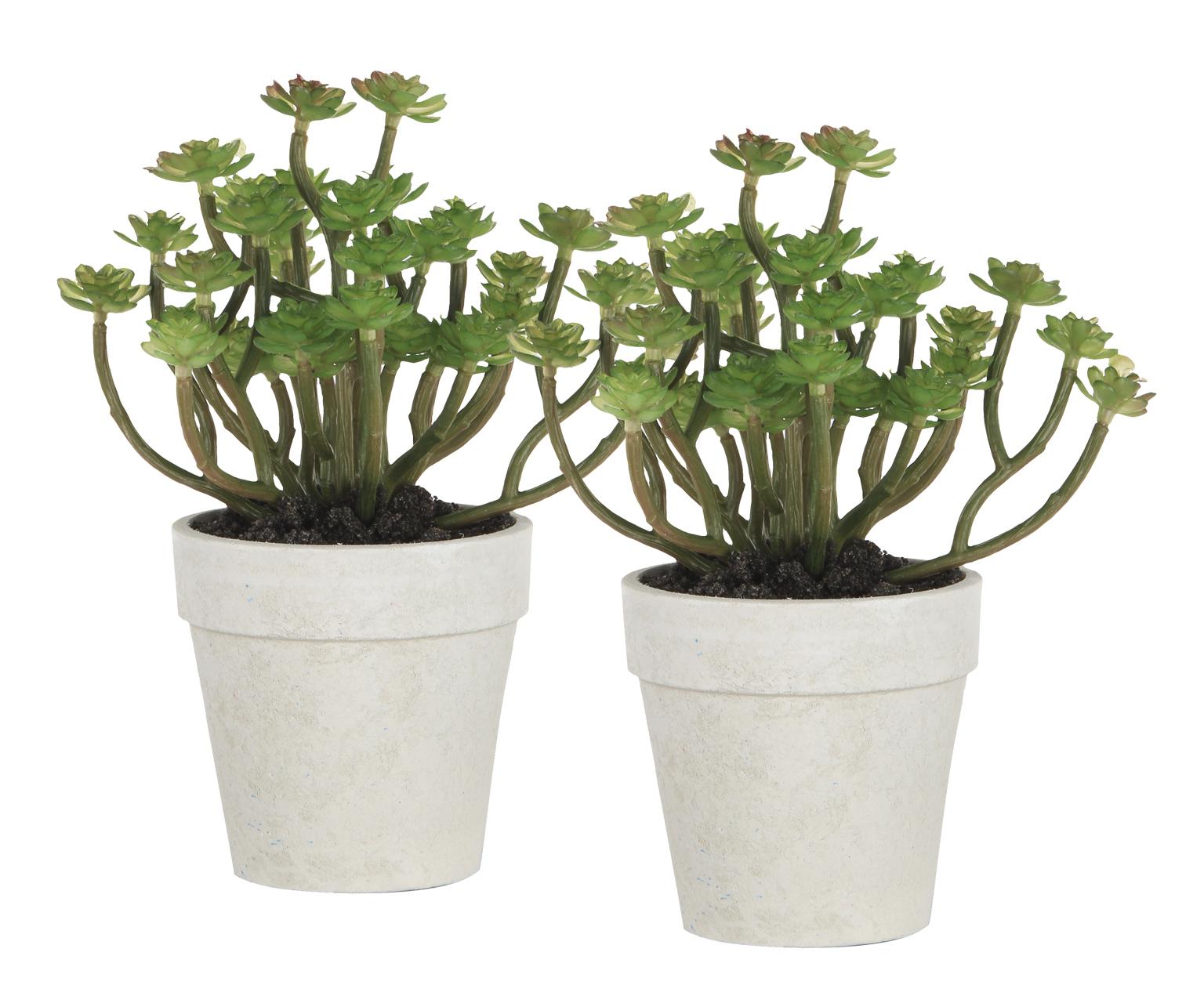 {} ARTEVALUCE Искусственное растение Sophia (11х15х18 см - 2 шт) искусственное растение мейджинг аквариум 22см в картонной коробке 15