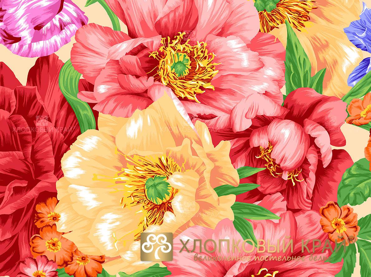 Постельное белье Хлопковый Край Постельное белье Флоренция Цвет: Бисквит (семейное)