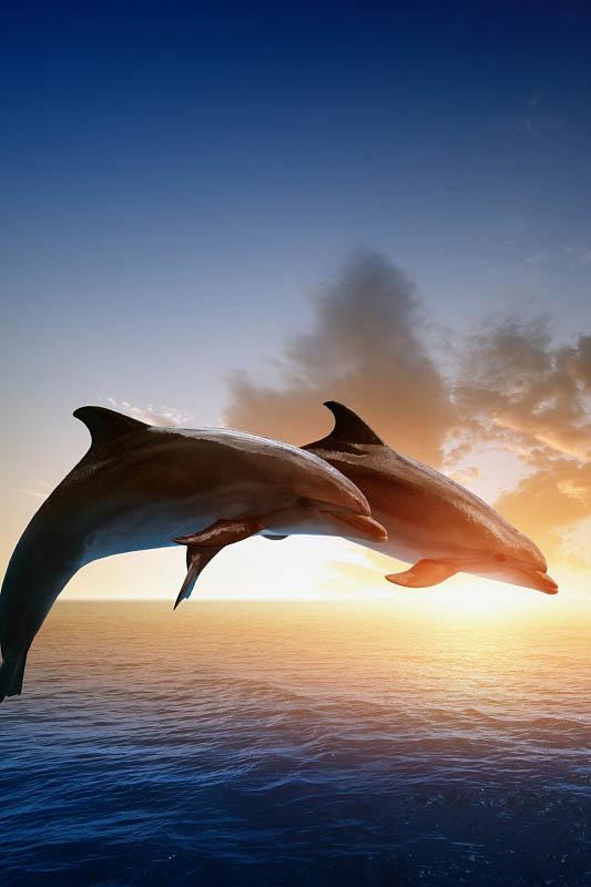 Шторы и карнизы для ванной StickButik Шторы для ванной Влюбленные Дельфины шторы и карнизы для ванной stickbutik шторы для ванной подводный мир