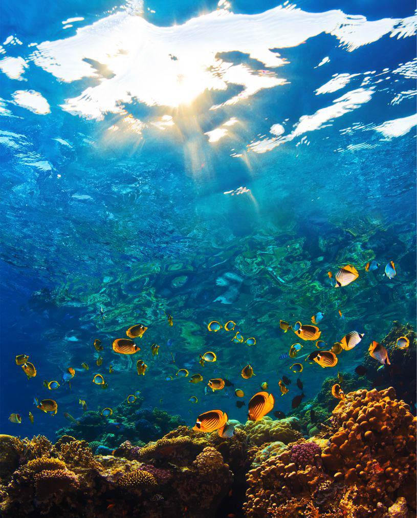 Шторы и карнизы для ванной StickButik Шторы для ванной Морской Риф