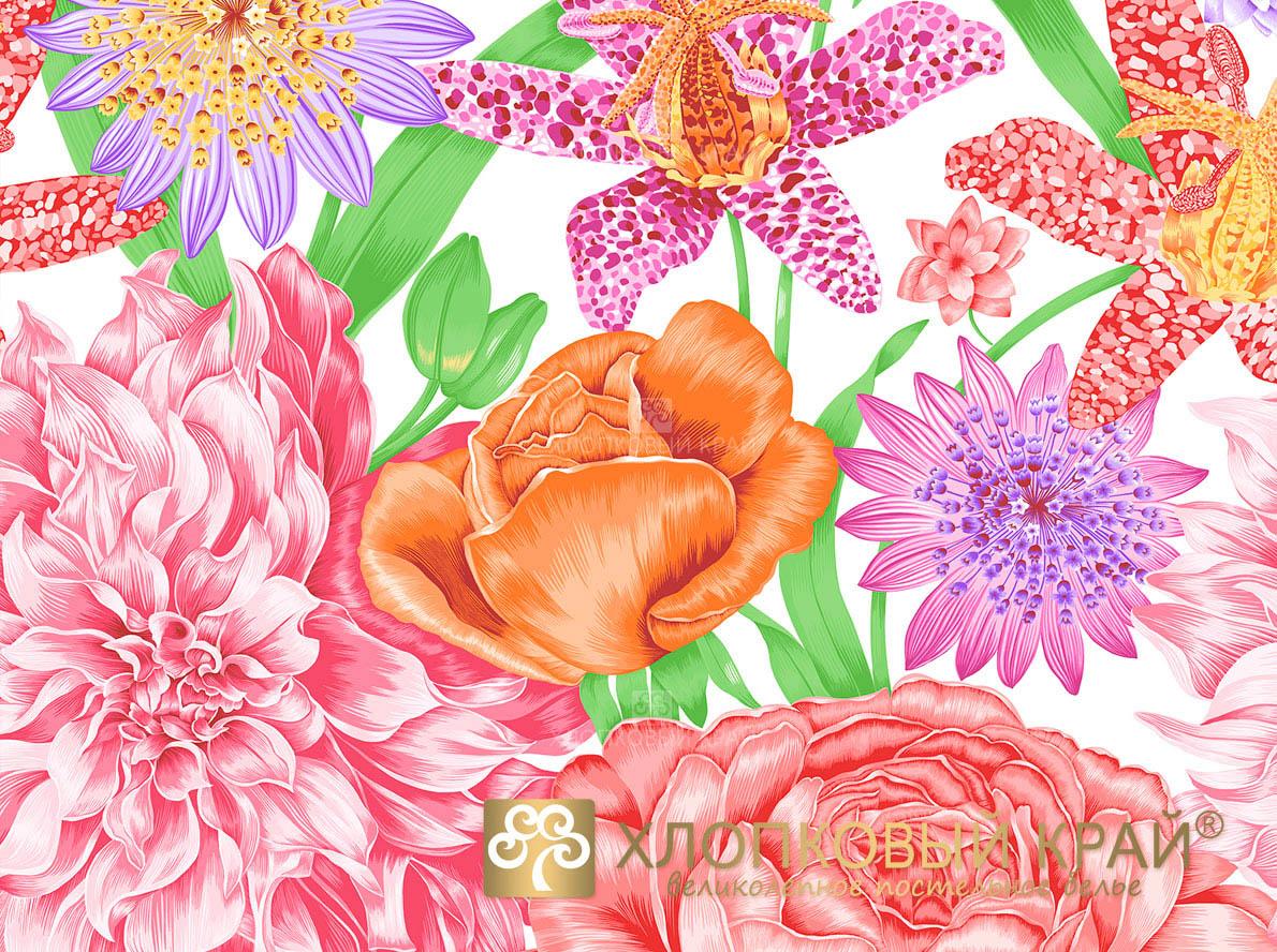 Постельное белье Хлопковый Край Постельное белье Венесуэла Цвет: Коралловый (семейное)