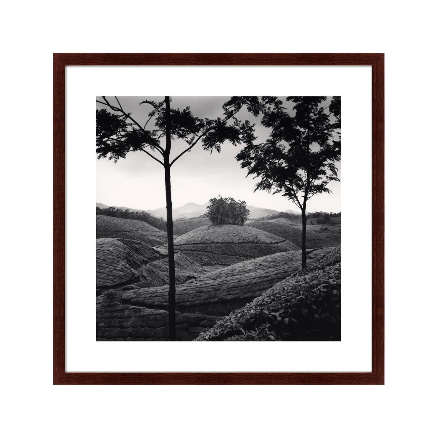 Картины, постеры, гобелены, панно Картины в Квартиру Картина Tea Estates (79х79 см)