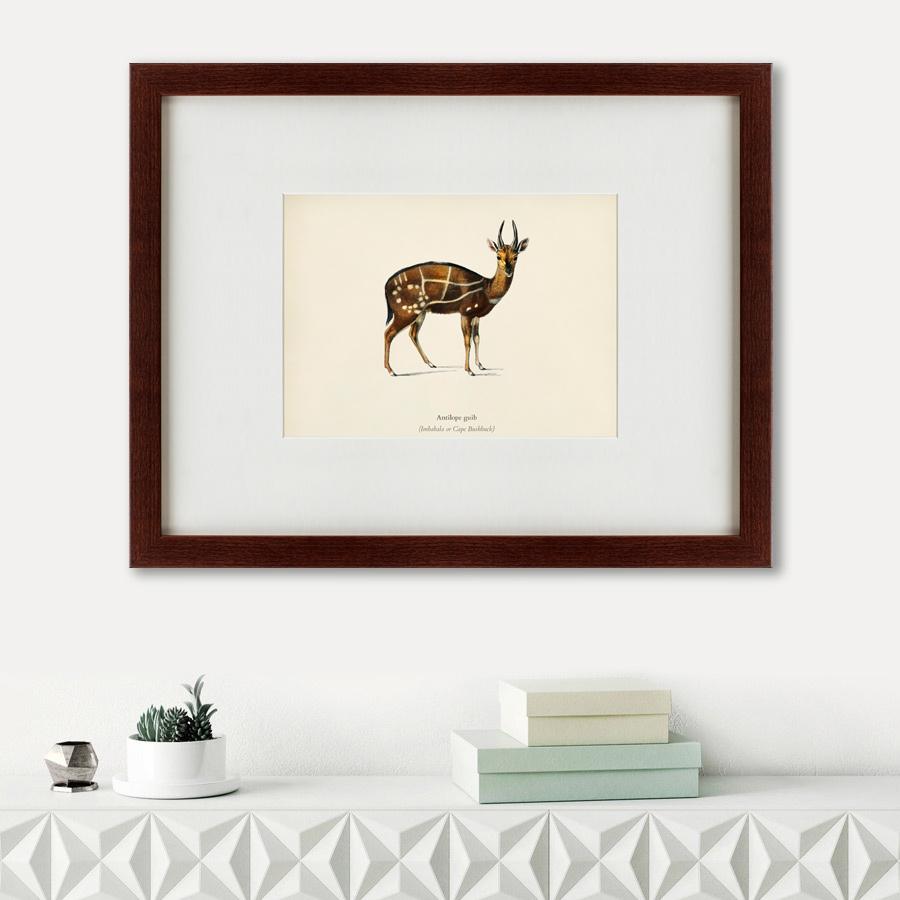 Картина Antilope Guib (47х60 см) фото