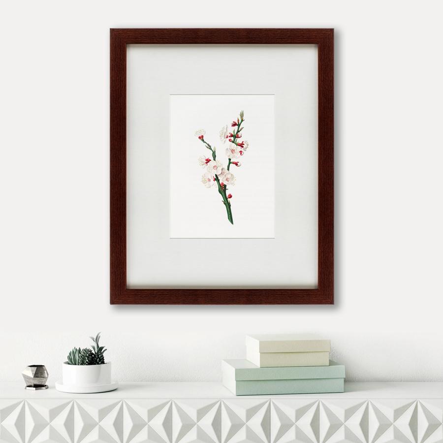 Картина Apricot Flower (42х52 см) фото